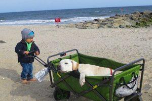 Se llama Poh y es un perro labrador de 14 años al que le diagnosticaron una enfermedad terminal. Su dueño lo ha llevado por varios lugares de Estados Unidos para disfrutar con él los últimos momentos de su vida. Foto:vía Instagram/pohthedogsbigadventure. Imagen Por: