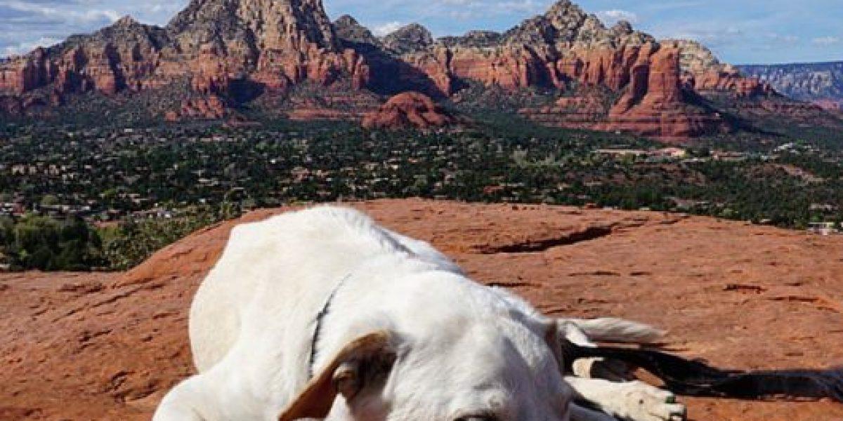 FOTOS: Lo que ha hecho este dueño con su perro moribundo los conmoverá