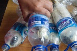 Quedan menos de 7 mil ahora. Pero capturan varios y los encierran en botellas plásticas. Por supuesto, muere el 40% de ellas. Foto:vía Barcroft Media. Imagen Por: