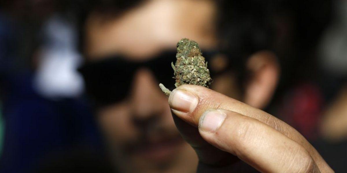 Chile es el mayor consumidor de marihuana en Latinoamérica