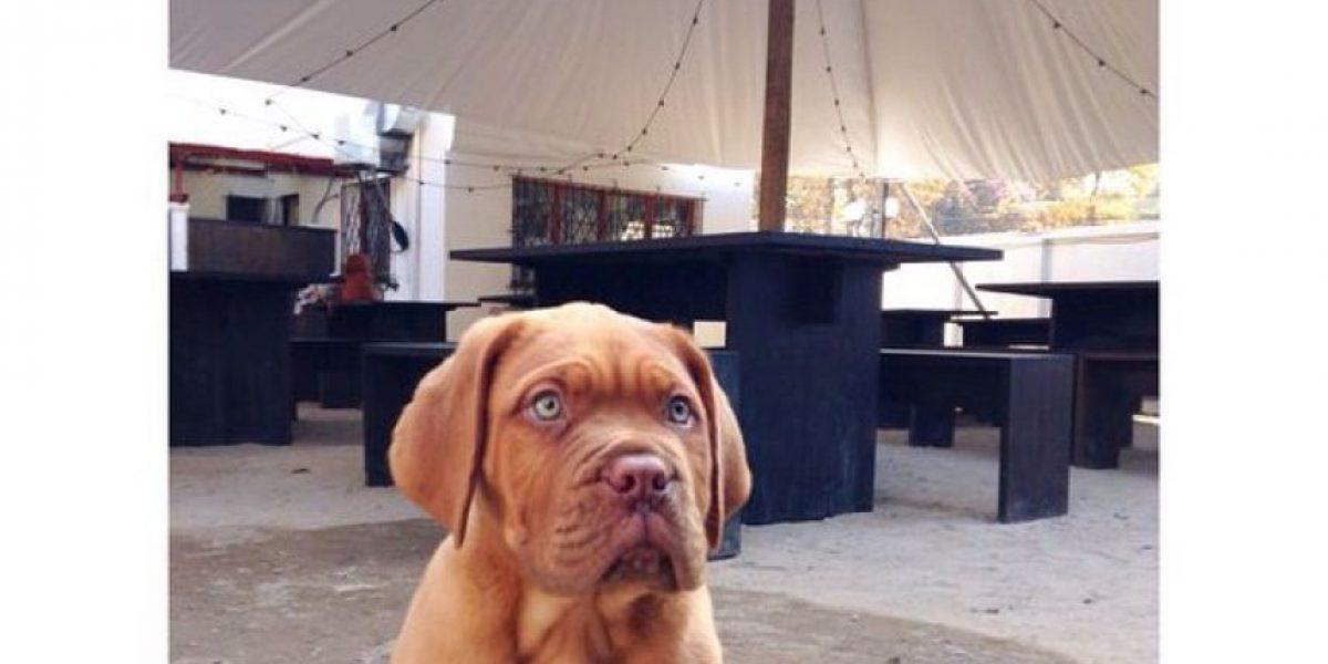 Dog Lovers comparten datos para llevar a sus perros a todos lados