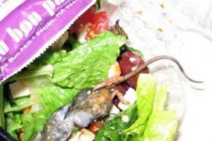 Una rata en la ensalada… Foto:Imgur. Imagen Por:
