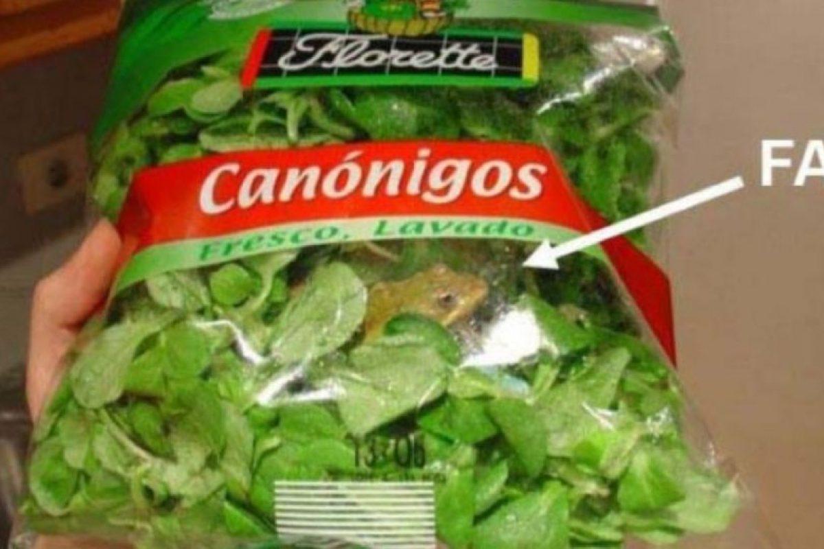 Y ranas vivas dentro de lechuga de canónigo Foto:Viralnova. Imagen Por: