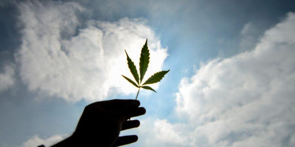 Hoy se vota legalización de marihuana medicinal