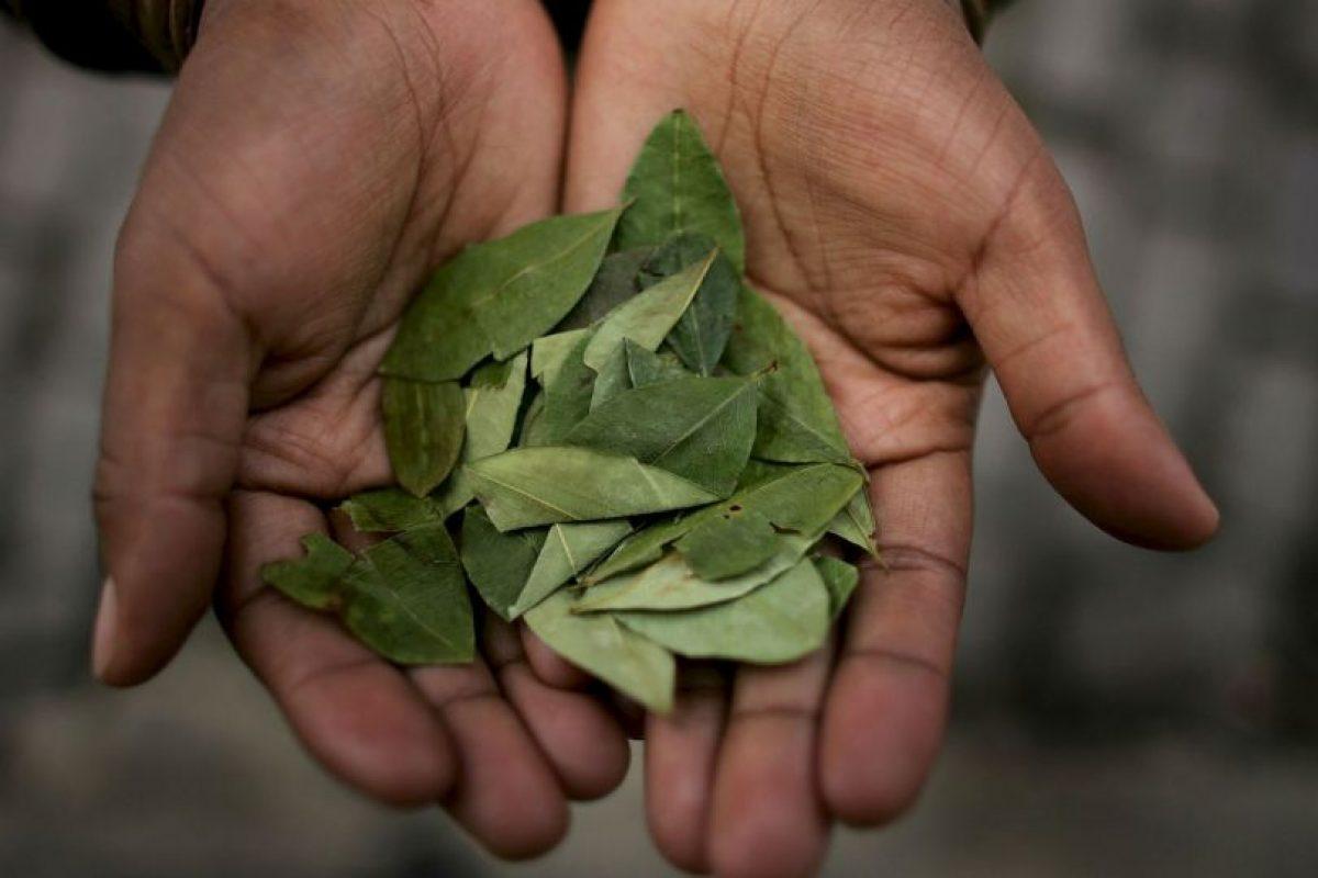 """3. Además, se mastica para """"combatir el hambre, la sed, el dolor y el cansancio"""". Foto:Getty Images. Imagen Por:"""