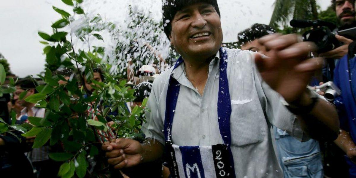 5 datos que deben conocer de la hoja de coca