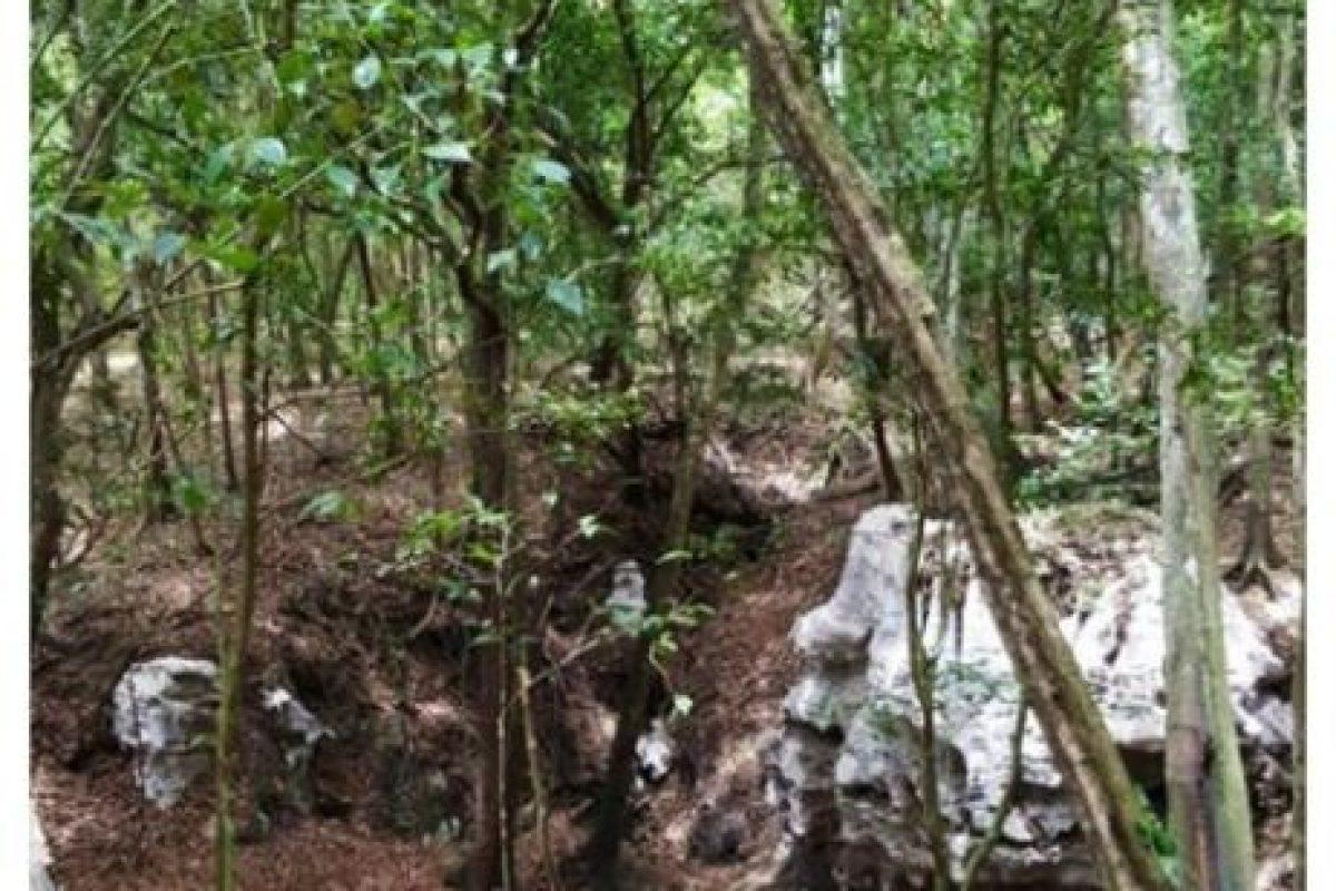 El incidente ocurrió en la selva del estado de Quintana Roo, en México Foto:vía instagram.com/dashberlin. Imagen Por: