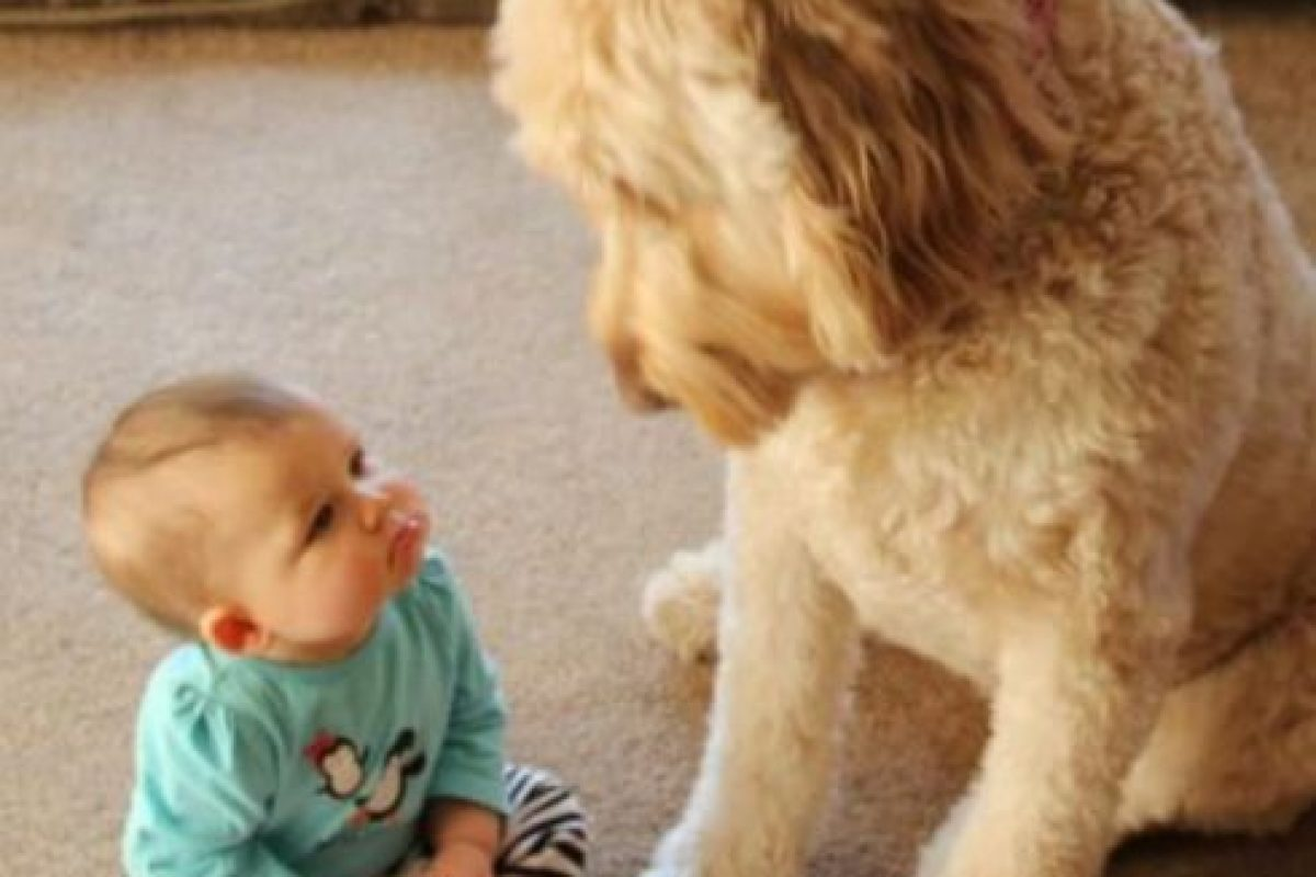 ¿Quién no miraría así a ese lindo bebé? Foto:Reddit. Imagen Por:
