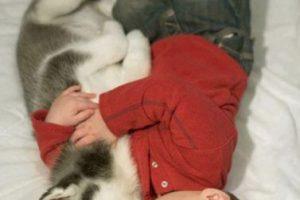 ¡A dormir! Foto:Reddit. Imagen Por: