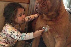 El doctor y su paciente ¿perro? Foto:Buendiario. Imagen Por: