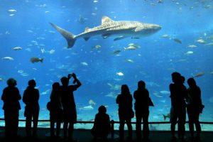 El equipo de Stanford comparó el registro de mordeduras de escualo contra datos de la actividad humana en el océano de California y calculó que, en 2013, la probabilidad de que un nadador fuera mordido por un tiburón blanco era de solo 1 en 728 millones. Foto:Getty Images. Imagen Por: