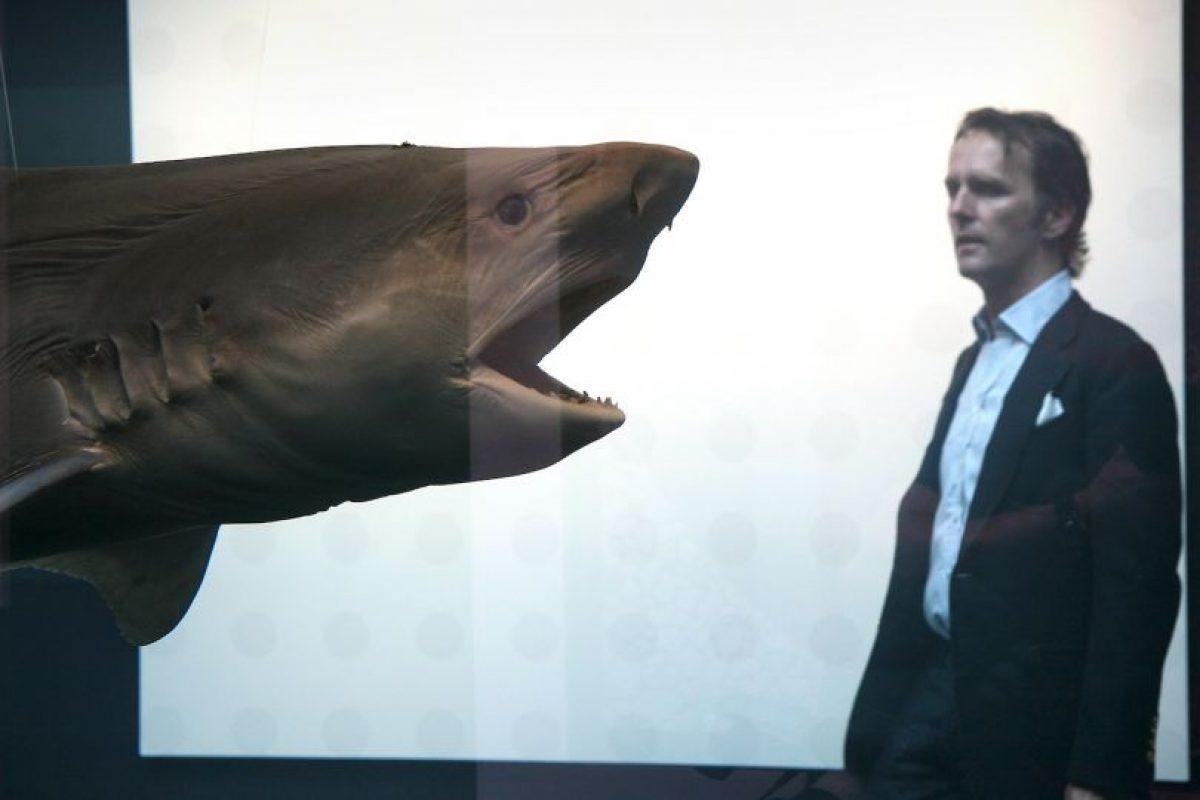En Carolina del Norte, Estados Unidos, se han registrado 8 ataques de tiburón en menos de un mes. Foto:Getty Images. Imagen Por:
