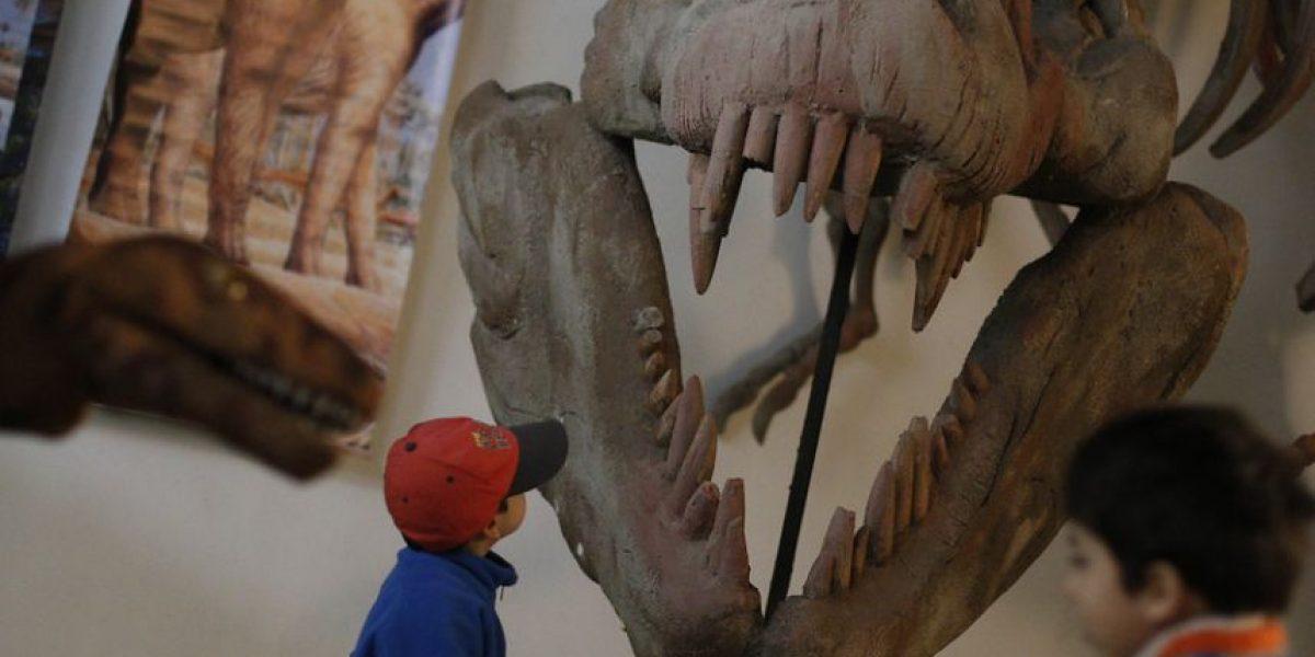 Expo Chilesaurios: la atracción turística de Valparaíso