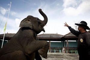 Desde el 8 de julio de este año, en México está prohibido el uso de animales en espectáculos cirquenses Foto:Getty Images. Imagen Por: