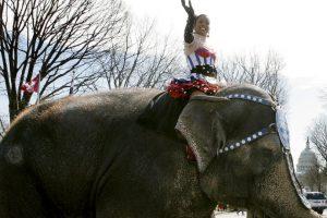 Por otro lado, el Partido Animalista en España también busca prohibir esta práctica Foto:Getty Images. Imagen Por: