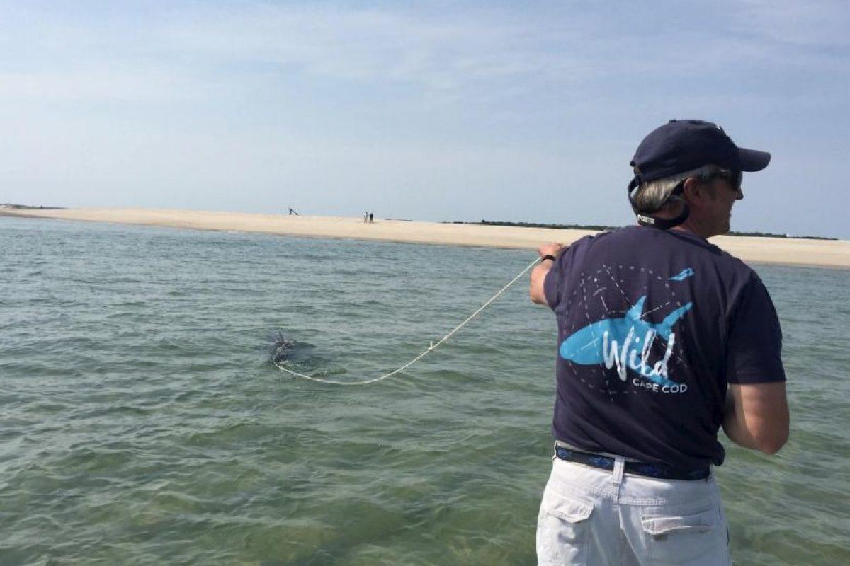 Para luego encargarse de que el animal fuera liberado lejos de la costa. Foto:Vía facebook.com/atlanticwhiteshark. Imagen Por: