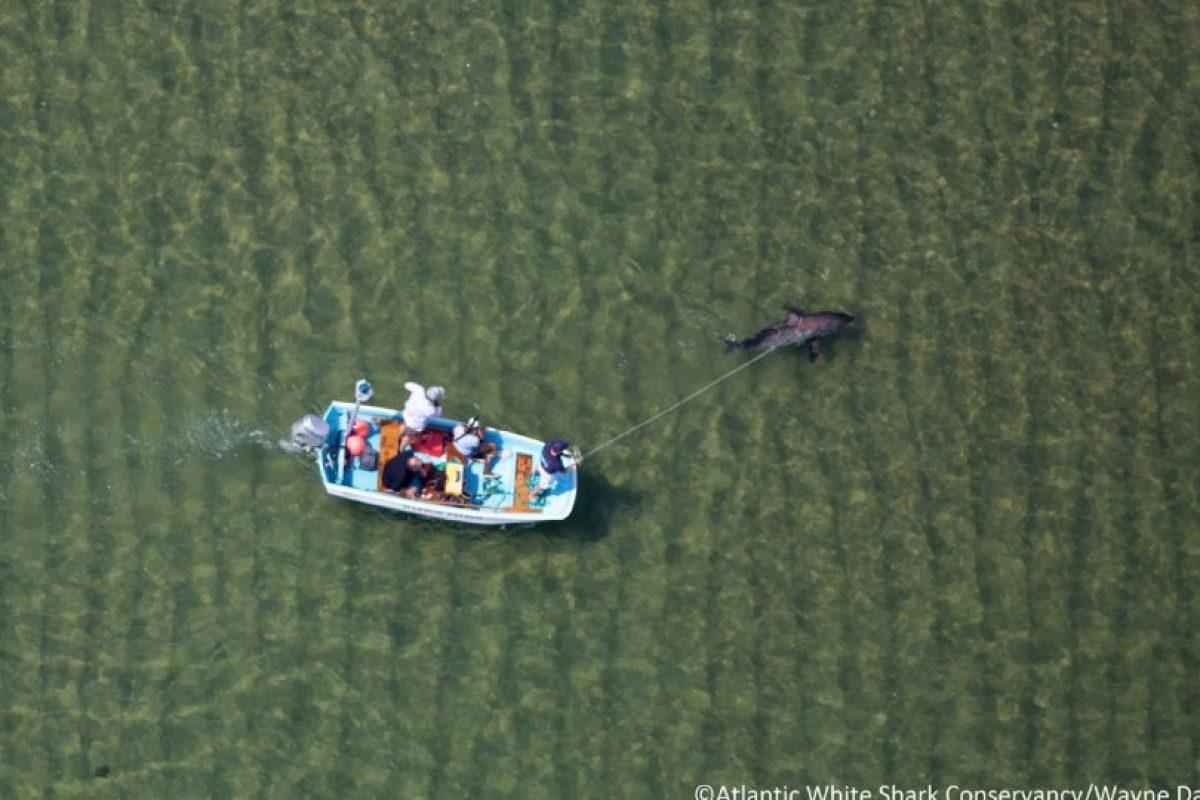 La gente llamó al equipo de rescate de la organización Atlantic White Shark Conservancy. Foto:Vía facebook.com/atlanticwhiteshark. Imagen Por: