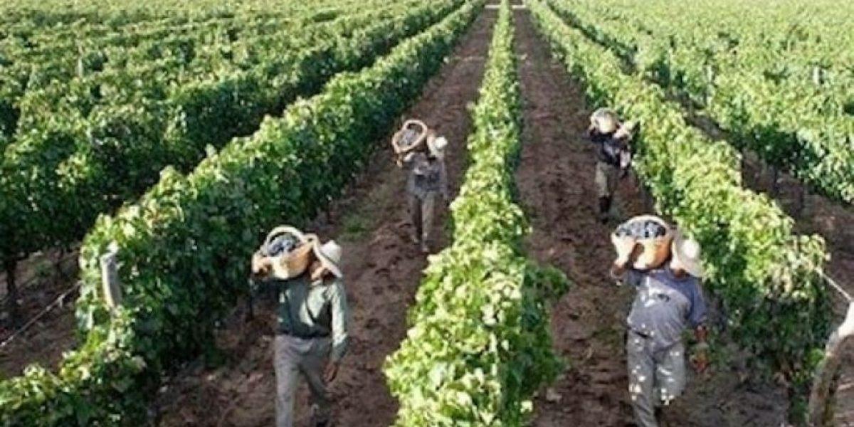 Brasil está preparado para ser el mayor proveedor de alimentos del mundo