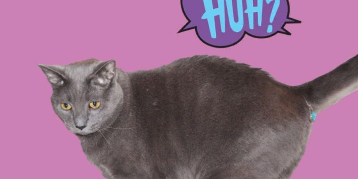 VIDEO: Este accesorio para gatos los dejará en shock