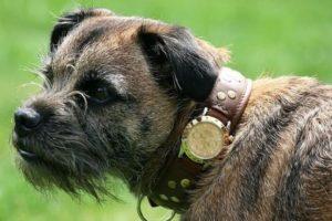 Rolex para perro Foto:Instagram. Imagen Por: