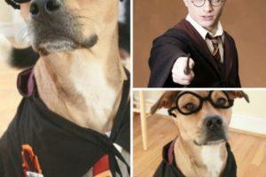 Disfraz de Harry Potter Foto:Pinterest. Imagen Por: