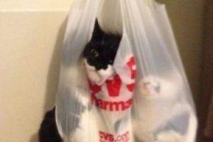 Él decidió investigar qué había dentro de esta bolsa. Foto:Imgur. Imagen Por: