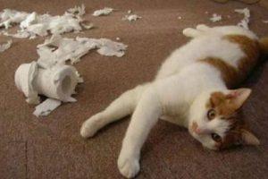 Les encanta el papel higiénico Foto:Reddit. Imagen Por: