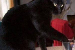 Suelen ser muy traviesos, como este gato. Foto:Tumblr. Imagen Por: