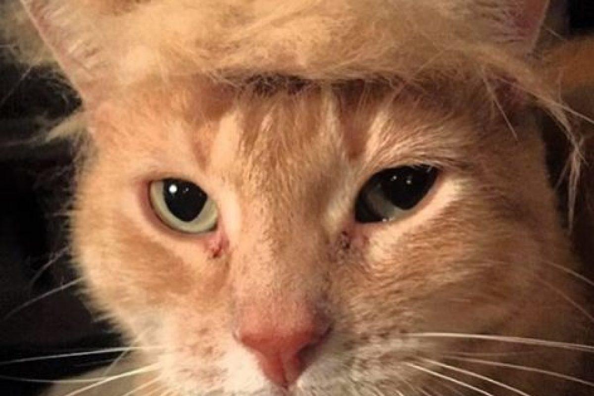 EL candidato a la presincia de Estados Unidos, Donald Trump Foto:Vía Instagram. Imagen Por: