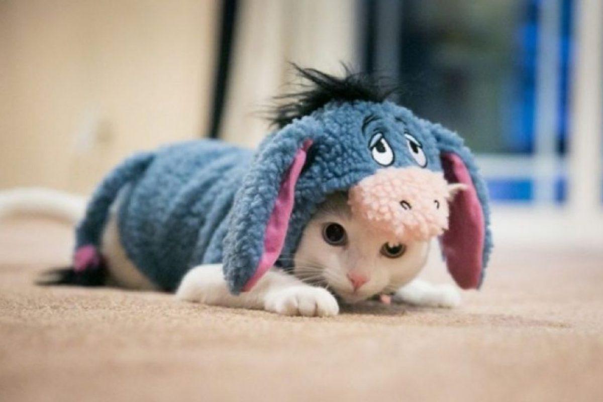 """El burro de """"Winnie Pooh"""", Ígor Foto:Pinterest. Imagen Por:"""