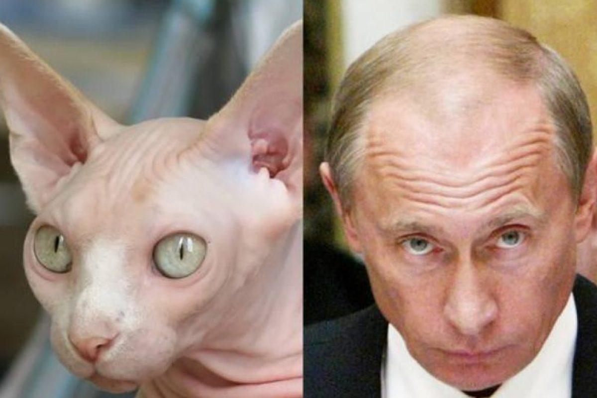 Él no está disfrazado, pero tampoco necesita estarlo para parecerse al mandatario de Rusia, Vladímir Putin. Foto:Tumblr. Imagen Por: