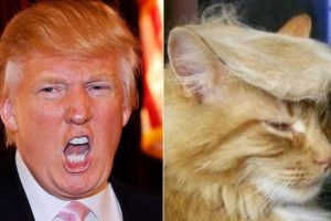 Donald Trump Foto:Lookslike.com. Imagen Por: