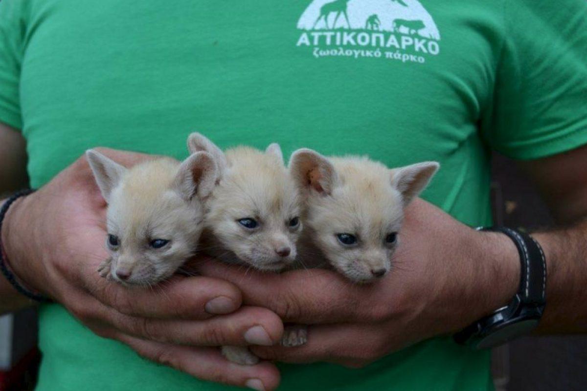 En el parque viven más de dos mil especies. Foto:Vía facebook.com/AtticaZoologicalPark. Imagen Por: