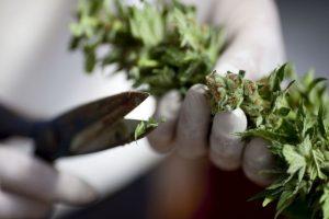 Aumento en el riesgo de la esquizofrenia en personas susceptibles Foto:Getty Images. Imagen Por: