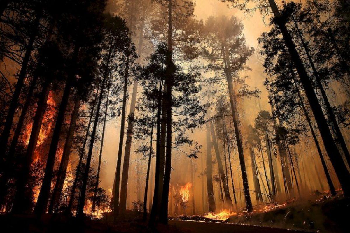 Un incendio forestal es el fuego que se extiende sin control en terreno forestal afectando a combustibles vegetales Foto:Getty Images. Imagen Por:
