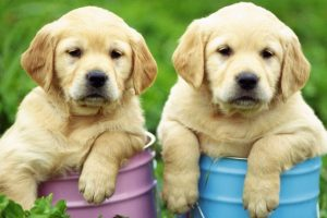 Cinofobia: Aversión a los perros Foto:Reproducción. Imagen Por: