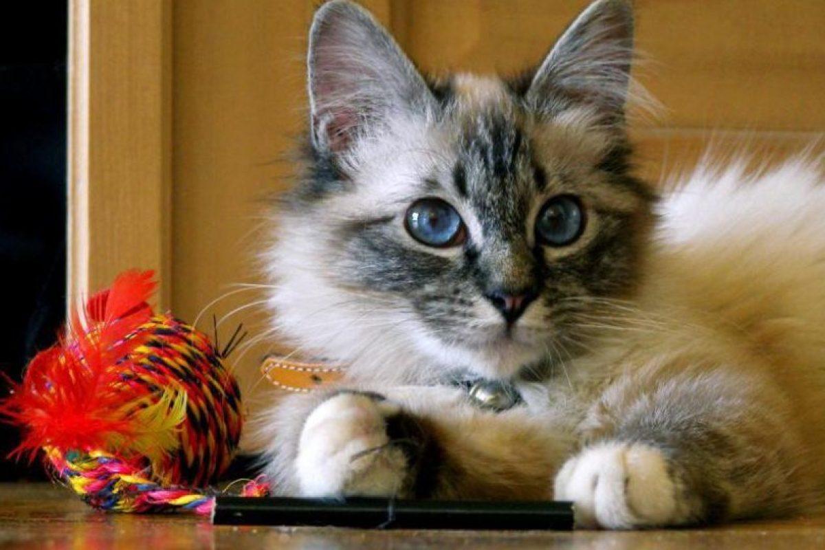 Ailurofobia: Aversión a los gatos domésticos Foto:Reproducción. Imagen Por: