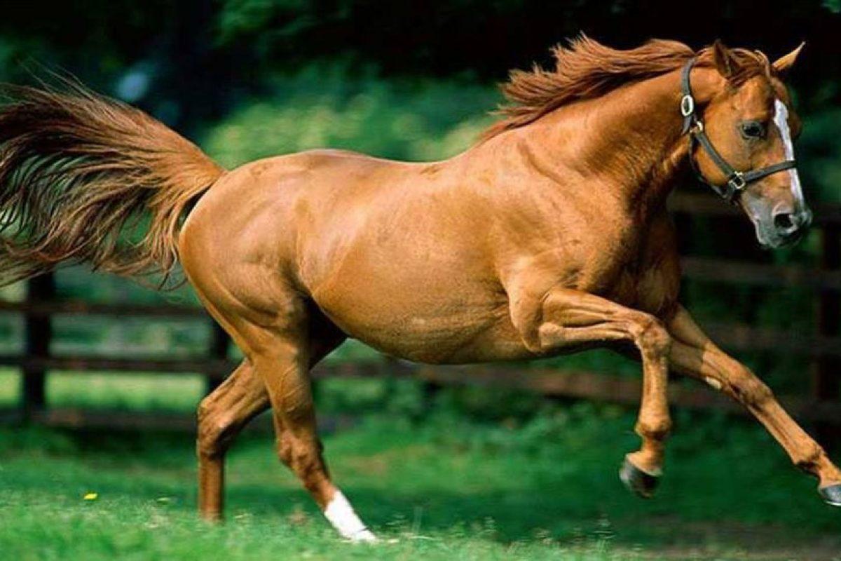 Equinofobia: Aversión a los caballos Foto:Reproducción. Imagen Por: