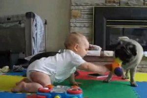 Algunos lo hacen en compañía de sus pequeños amos. Foto:Pinterest. Imagen Por: