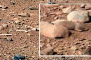 5. Una rata Foto:NASA. Imagen Por: