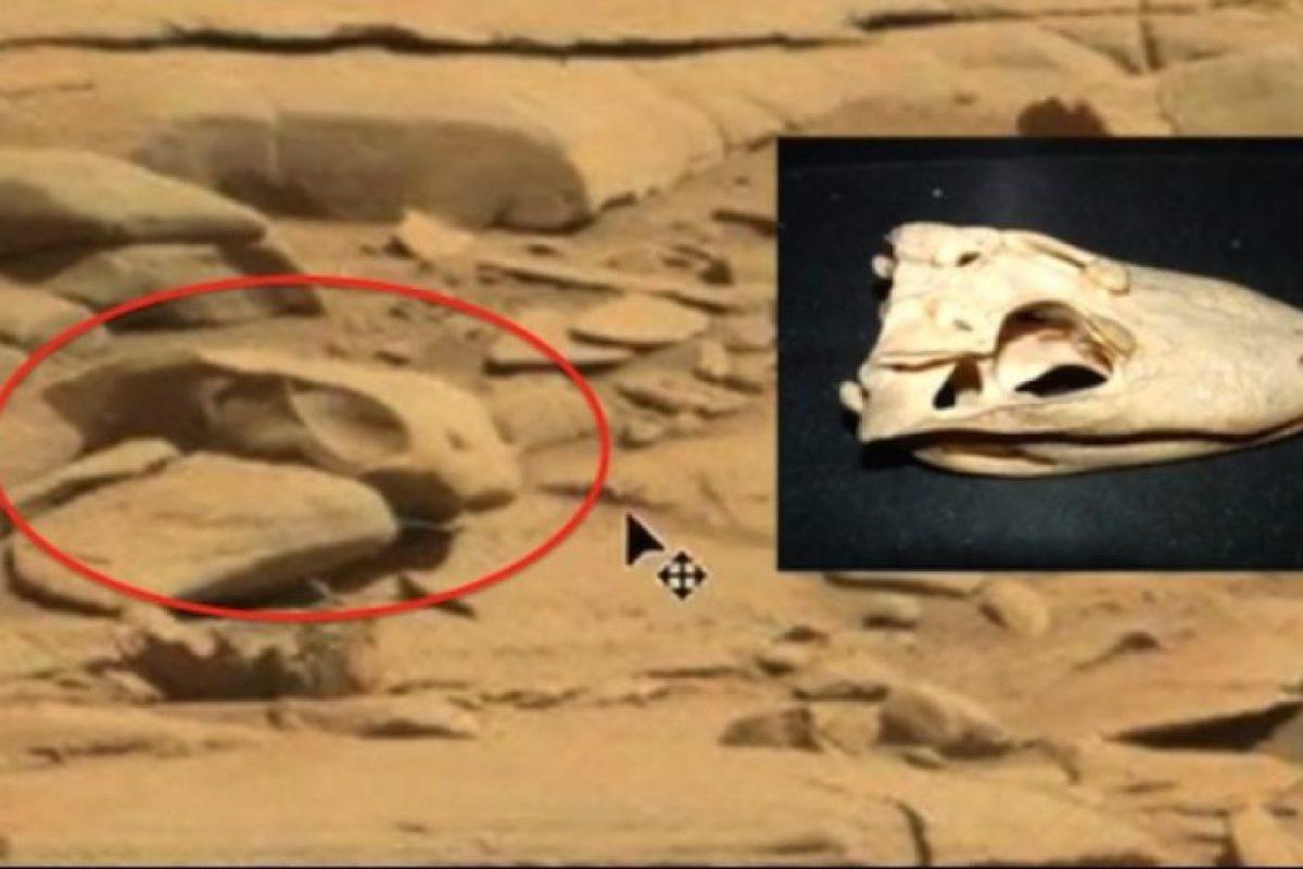 7. Un cráneo Foto:ufosightingsdaily.com. Imagen Por:
