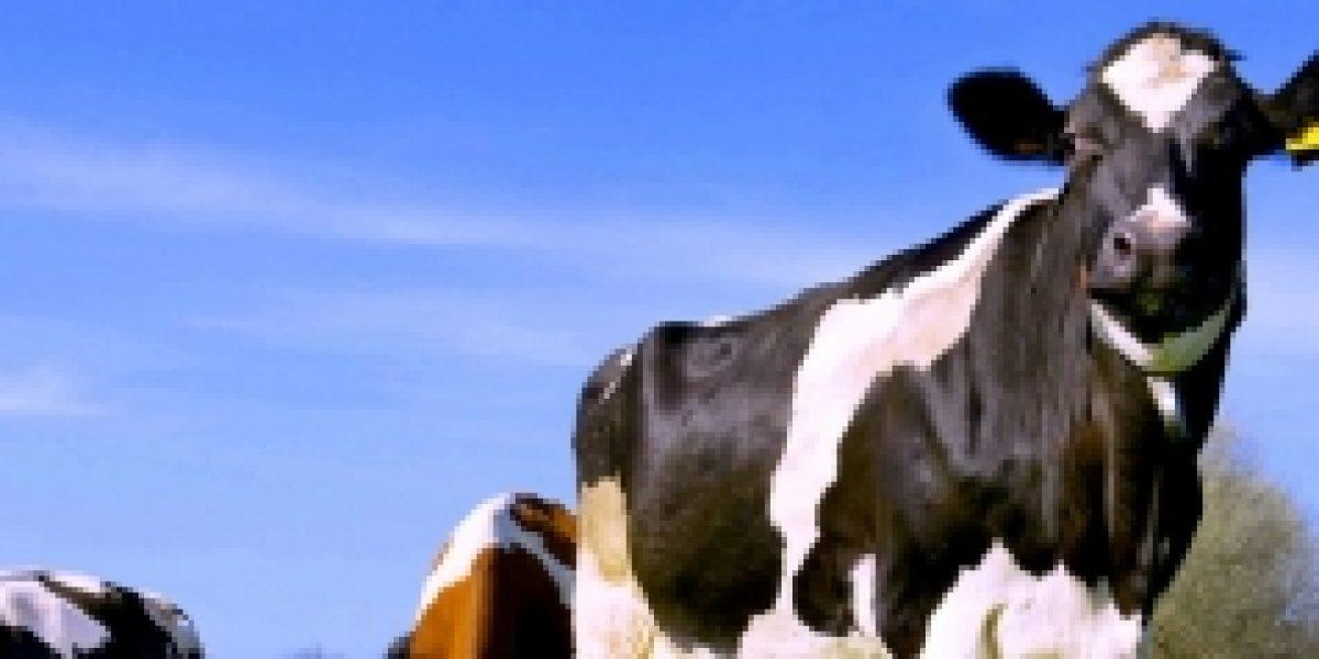 La leche presentará su peor precio histórico dentro de los próximos meses