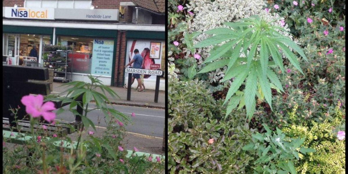 Esta ciudad tiene marihuana en sus parques públicos, conozca por qué