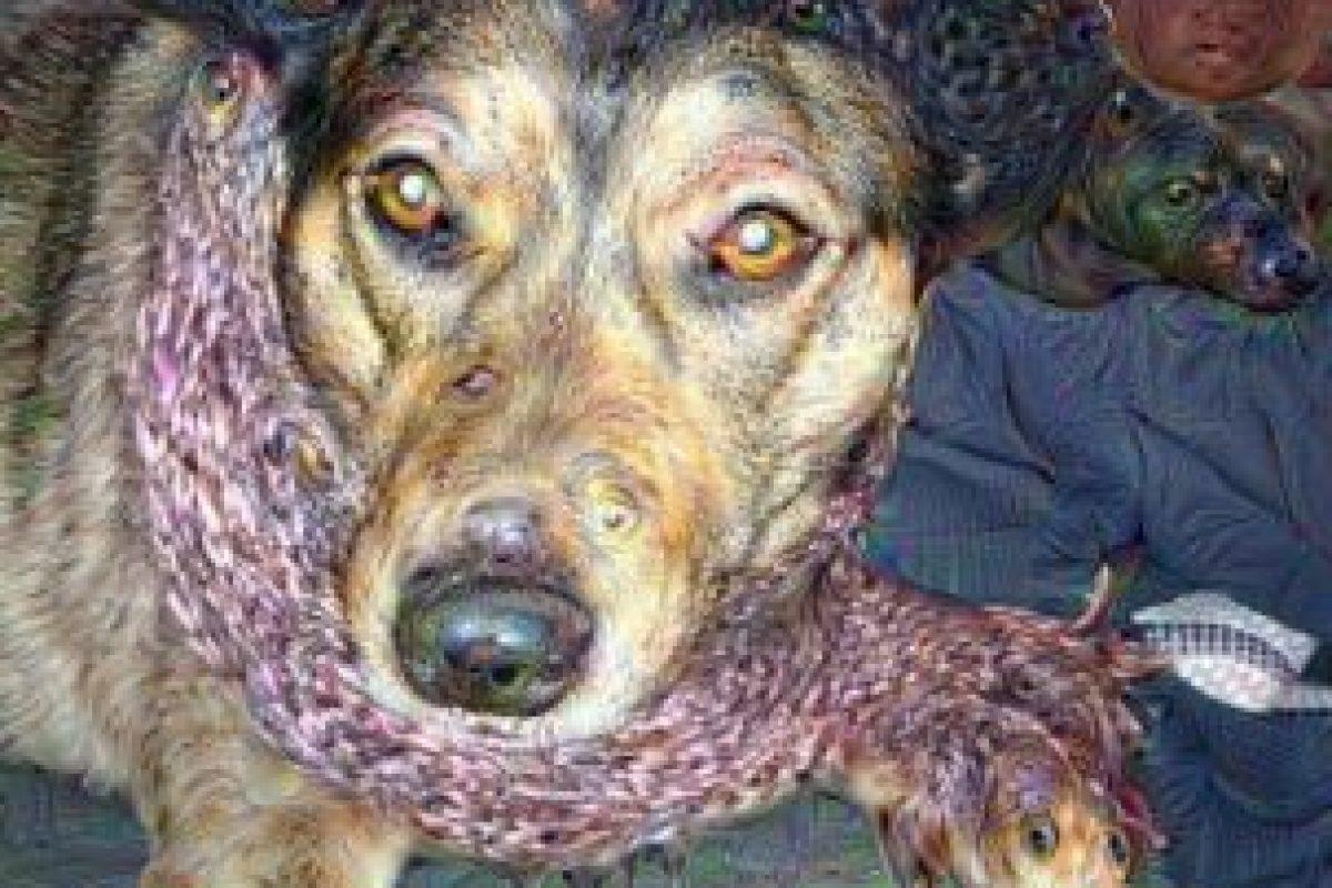 Estas fotos con el filtro se viralizaron en Internet Foto:psychic-vr-lab.com/deepdream/. Imagen Por: