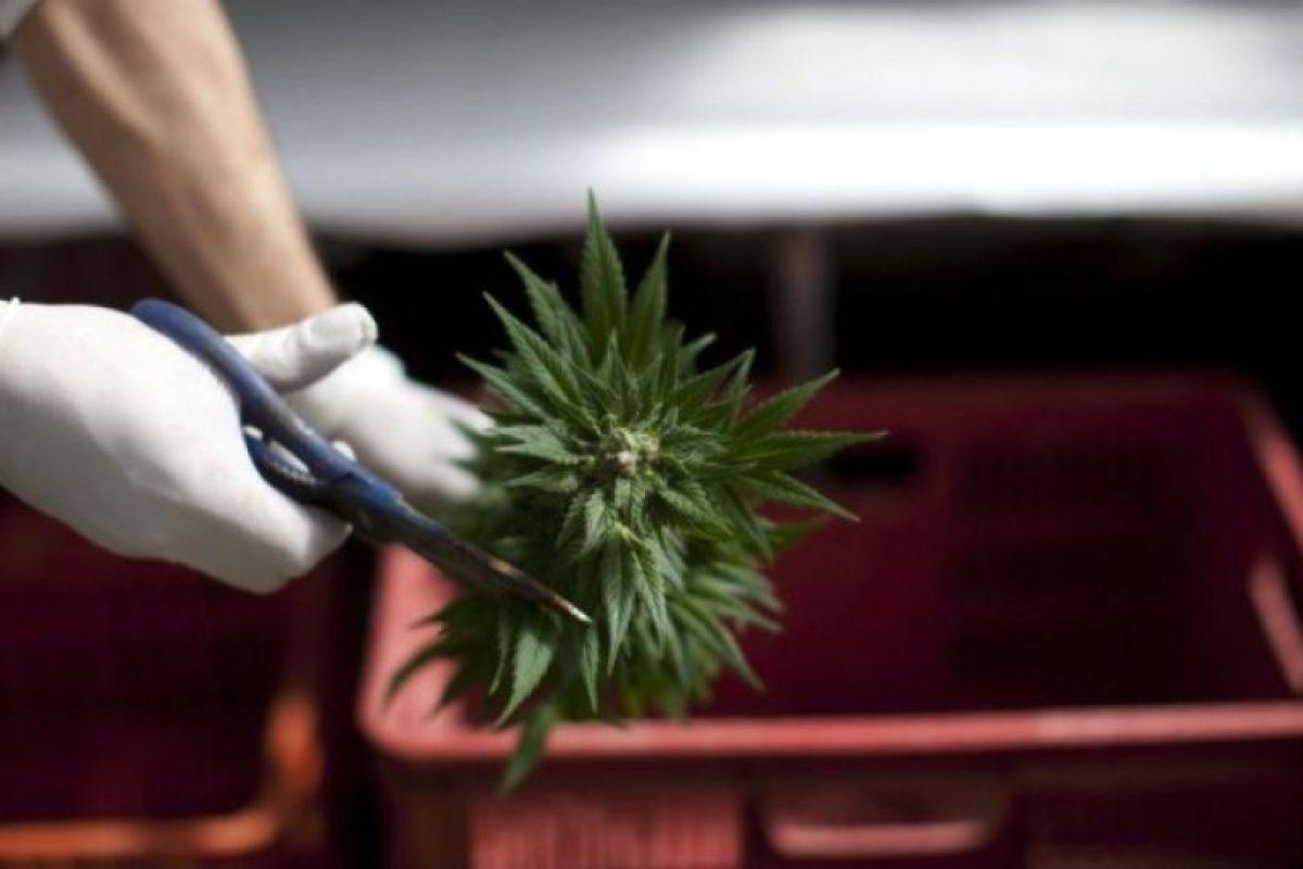"""Según la Sociedad Americana contra el Cáncer, """"un número de estudios pequeños de la marihuana fumada encontró que puede ser útil en el tratamiento de las náuseas y vómitos de la quimioterapia del cáncer"""" Foto:Getty Images. Imagen Por:"""