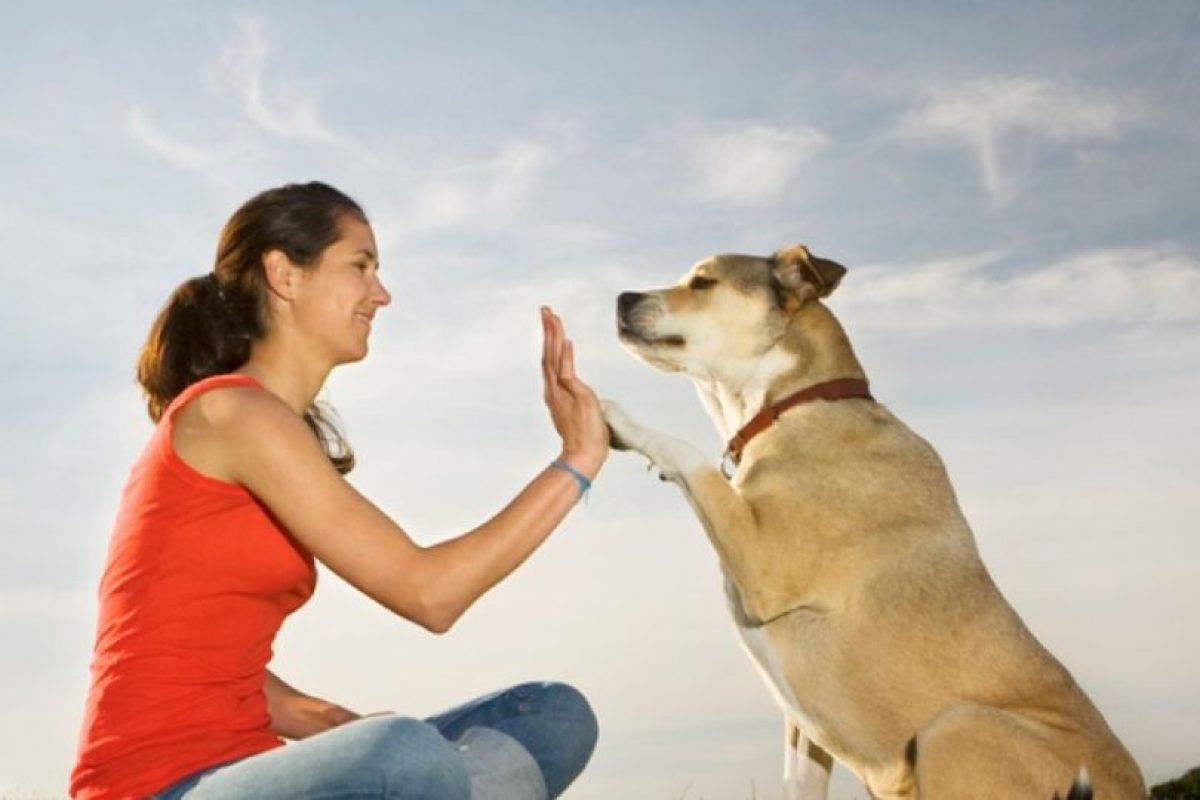 """En aquel país es posible tener sexo con animales mientras """"no se les torture"""". Foto:vía Getty Images. Imagen Por:"""