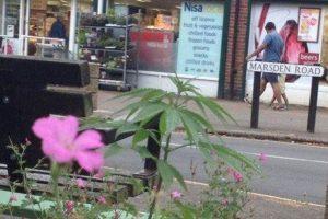 Fueron colocadas por un grupo que busca la legalización de la droga Foto:Facebook.com/pages/Welwyn-Garden-City-Cannabis-Club. Imagen Por: