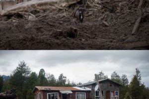 Primera imagen del 26 de abril de 2015 en Rio Blanco luego de la erupción del volcán Calbuco y que cubrió el lugar de material piroclástico y segunda imagen del 22 de julio de 2015 de como se encuentra en la actualidad el lugar Foto:DAVID CORTES/AGENCIAUNO. Imagen Por: