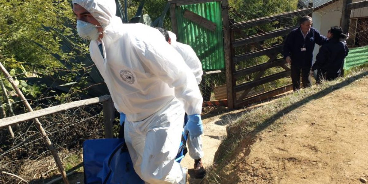 Anciano muere y es devorado por su propios perros en Limache