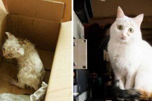 3. Antes y después Foto:Imgur. Imagen Por: